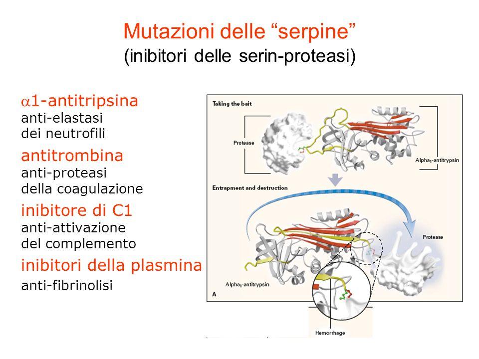 Mutazioni delle serpine (inibitori delle serin-proteasi)