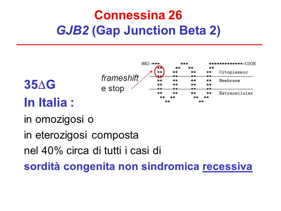 Connessina 26 GJB2 (Gap Junction Beta 2)