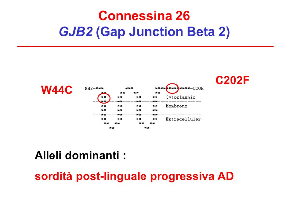 Connessina 26 GJB2 (Gap Junction Beta 2)
