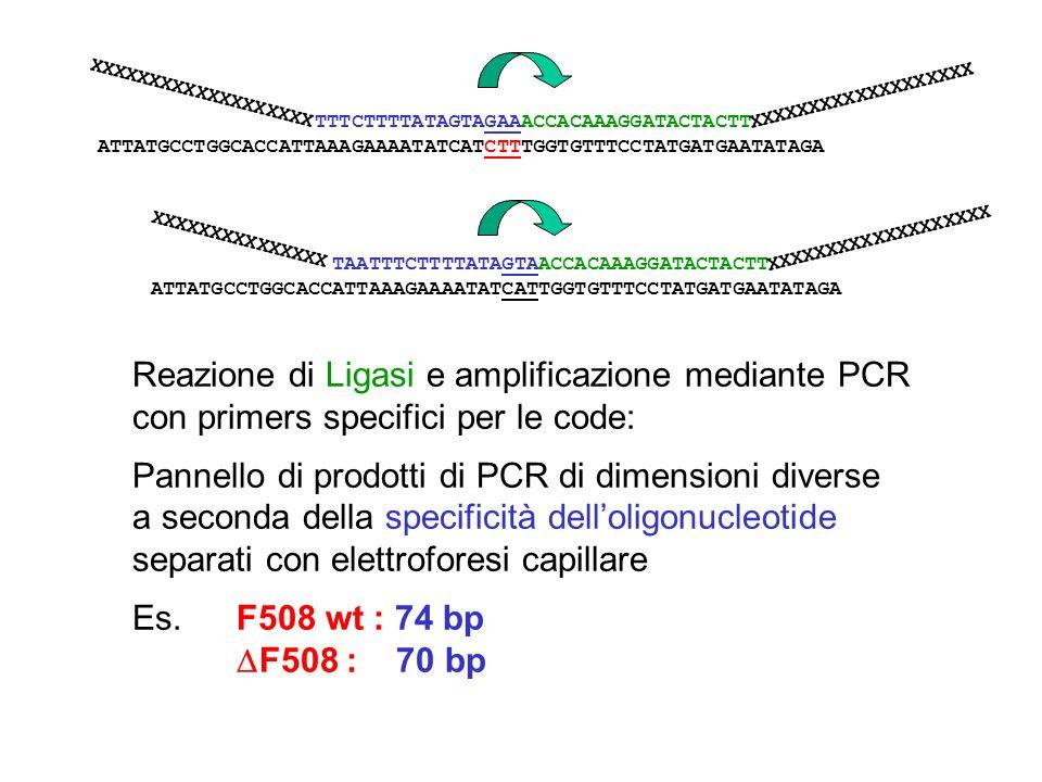 Reazione di Ligasi e amplificazione mediante PCR