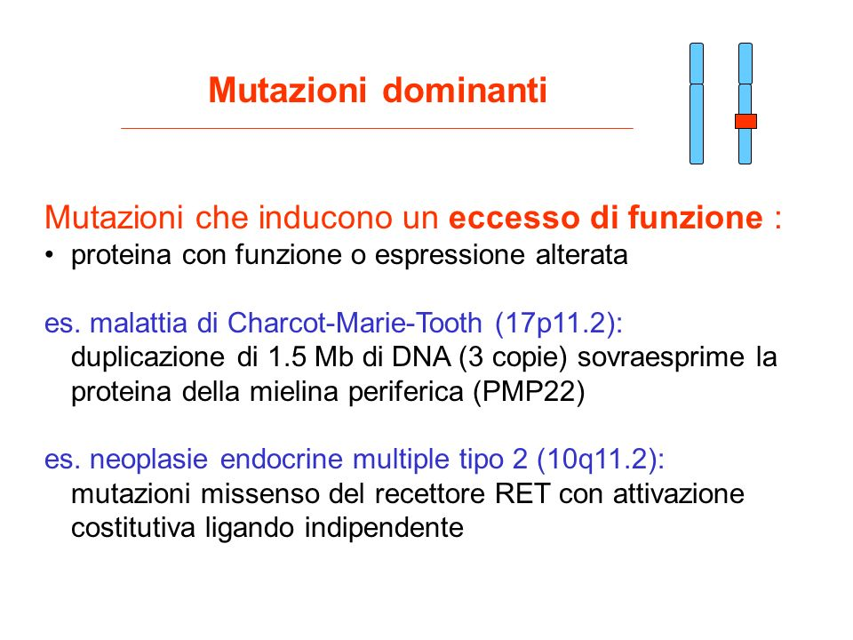 Mutazioni dominanti Mutazioni che inducono un eccesso di funzione :