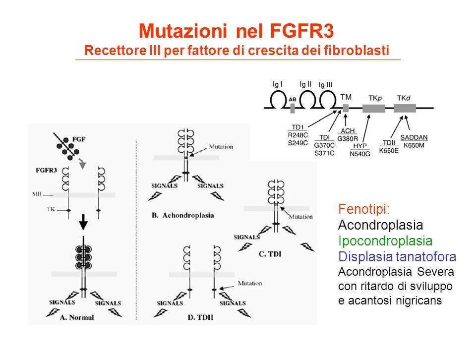 Recettore III per fattore di crescita dei fibroblasti