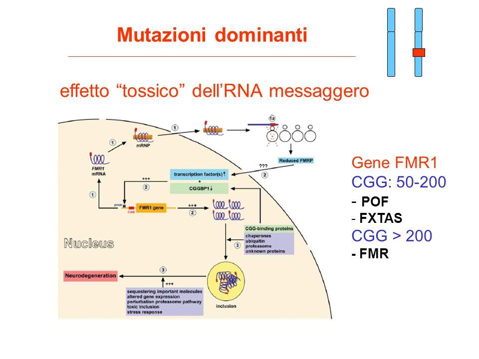 Mutazioni dominanti effetto tossico dell'RNA messaggero Gene FMR1