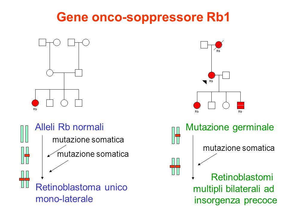 Gene onco-soppressore Rb1