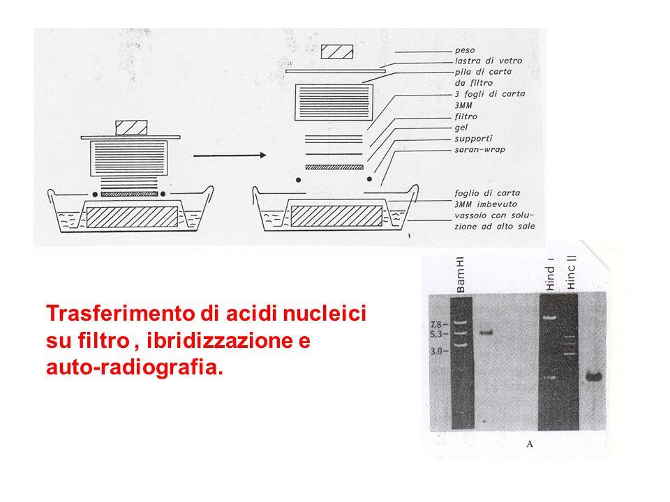 Trasferimento di acidi nucleici