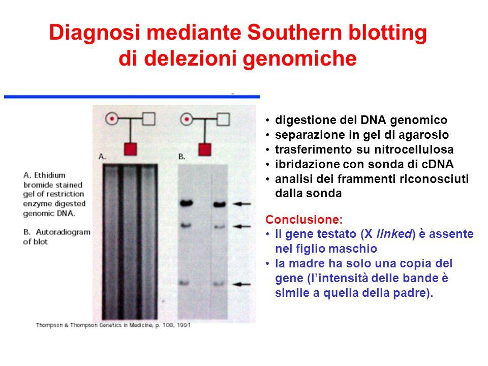 Diagnosi mediante Southern blotting di delezioni genomiche