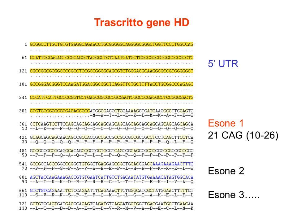 Trascritto gene HD 5' UTR Esone 1 21 CAG (10-26) Esone 2 Esone 3…..