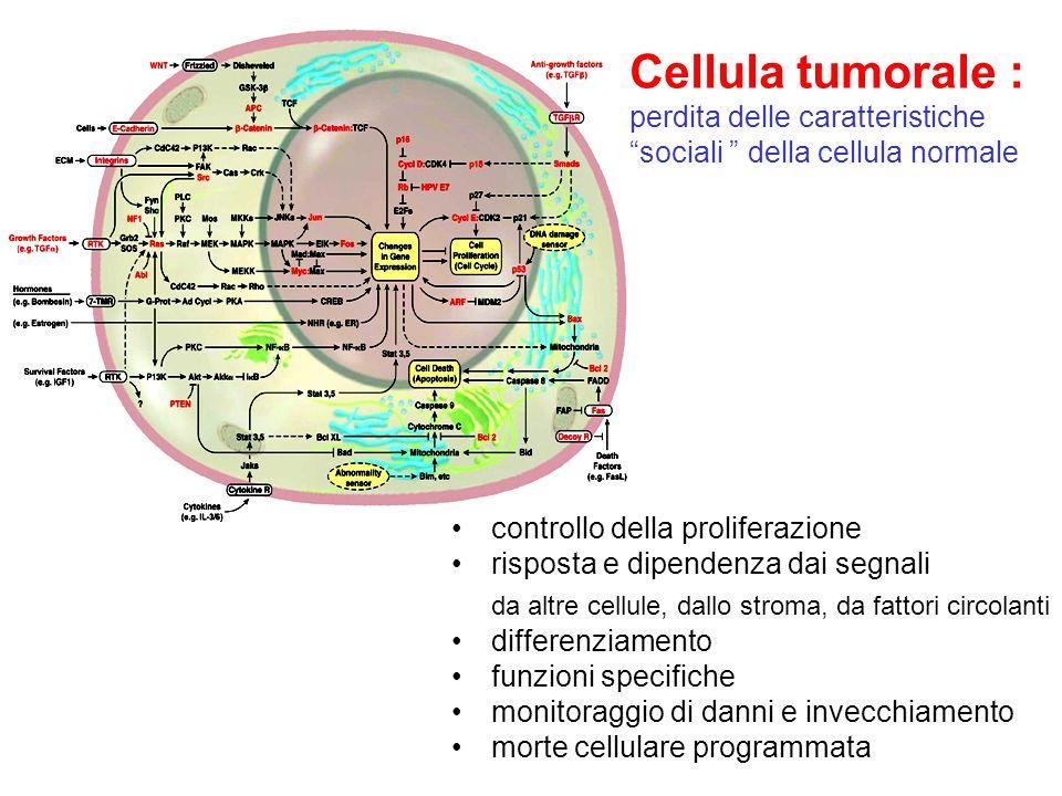 Cellula tumorale : perdita delle caratteristiche sociali della cellula normale
