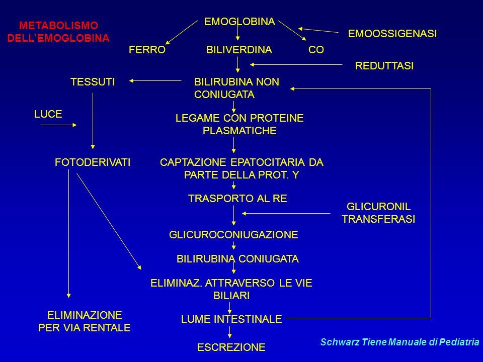 METABOLISMO DELL'EMOGLOBINA