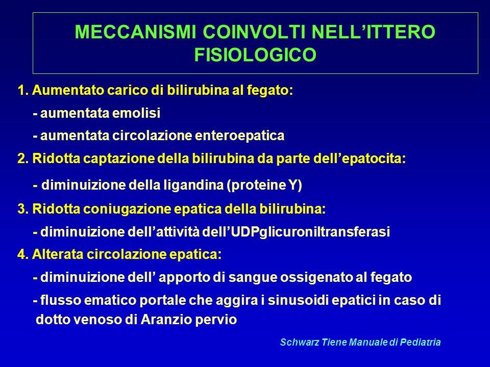 MECCANISMI COINVOLTI NELL'ITTERO FISIOLOGICO