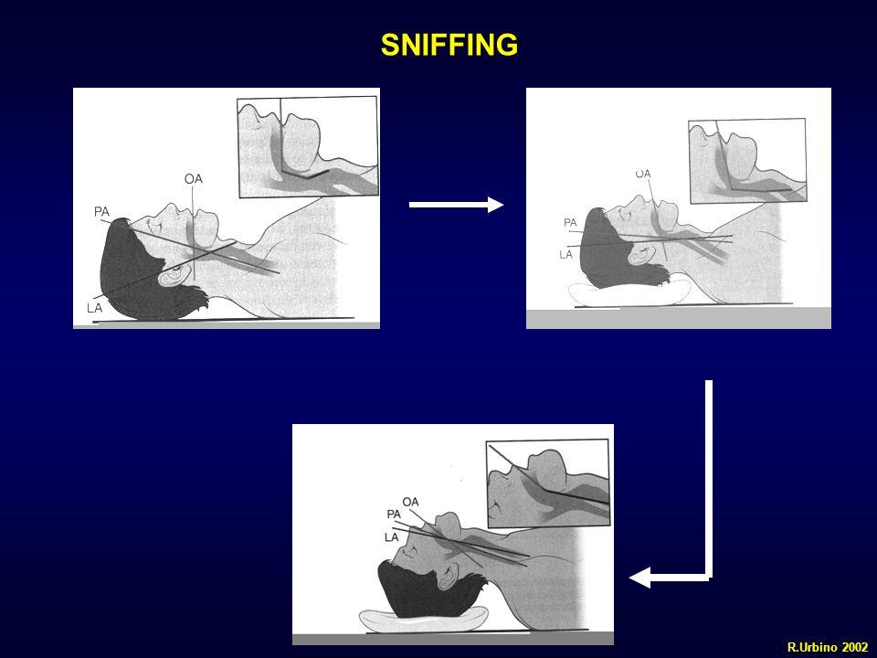 SNIFFING R.Urbino 2002