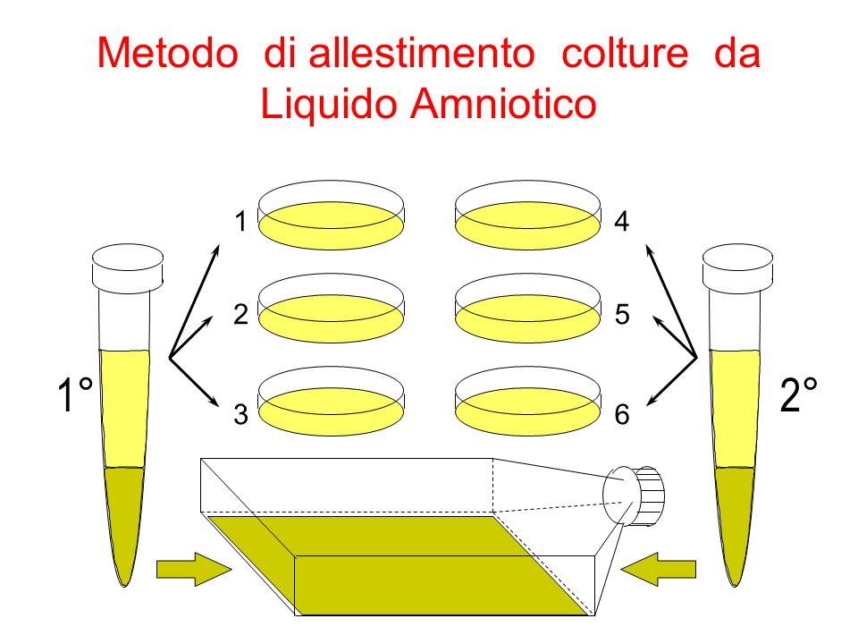 Metodo di allestimento colture da Liquido Amniotico