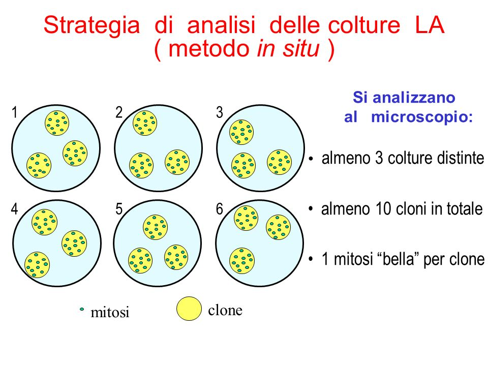 Strategia di analisi delle colture LA ( metodo in situ )