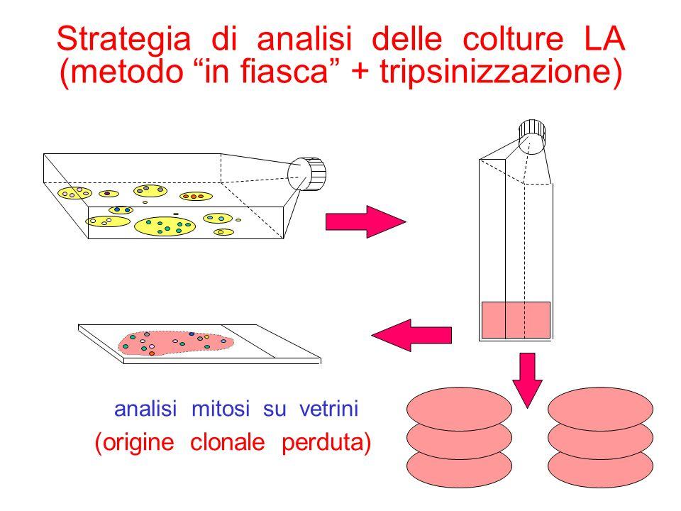 Strategia di analisi delle colture LA (metodo in fiasca + tripsinizzazione)