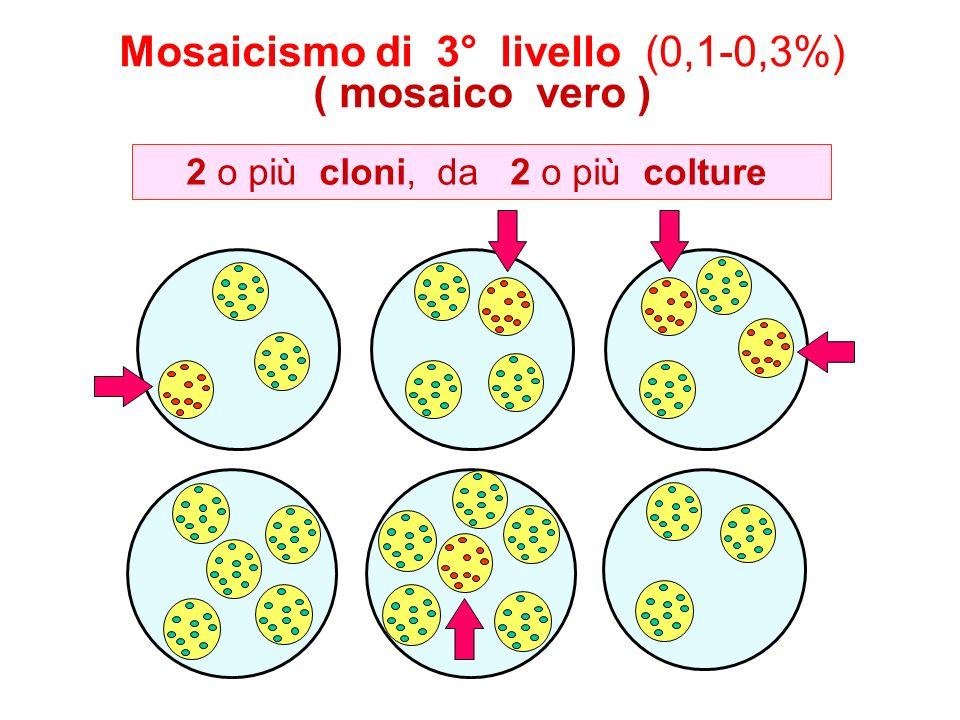 Mosaicismo di 3° livello (0,1-0,3%) ( mosaico vero )