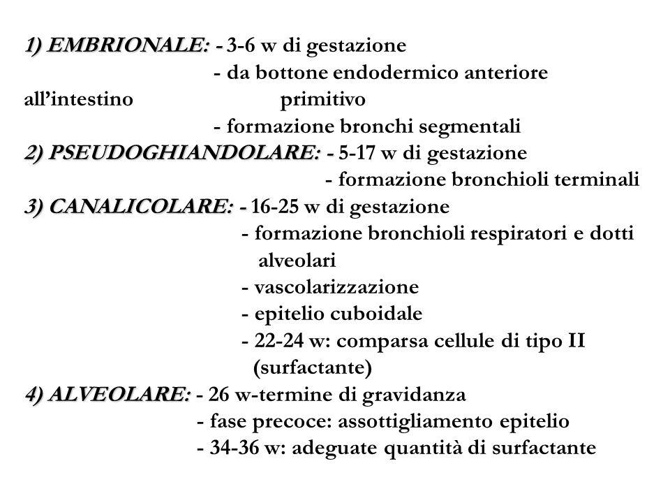 1) EMBRIONALE: - 3-6 w di gestazione