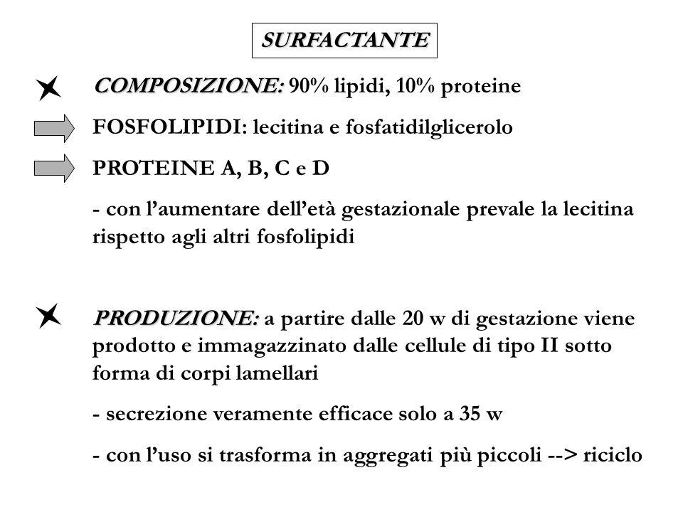 SURFACTANTE COMPOSIZIONE: 90% lipidi, 10% proteine. FOSFOLIPIDI: lecitina e fosfatidilglicerolo. PROTEINE A, B, C e D.