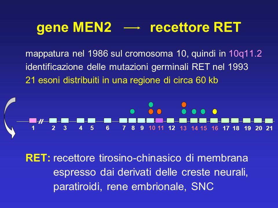 gene MEN2 recettore RET RET: recettore tirosino-chinasico di membrana