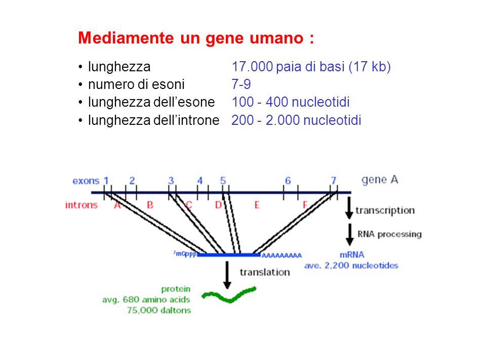 Mediamente un gene umano :