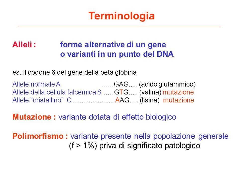 Terminologia Alleli : forme alternative di un gene