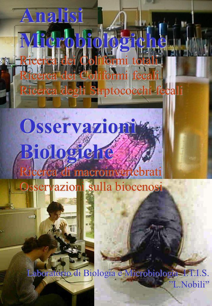 Analisi Microbiologiche Ricerca dei Coliformi totali Ricerca dei Coliformi fecali Ricerca degli Strptococchi fecali Osservazioni Biologiche Ricerca di macroinvertebrati Osservazioni sulla biocenosi