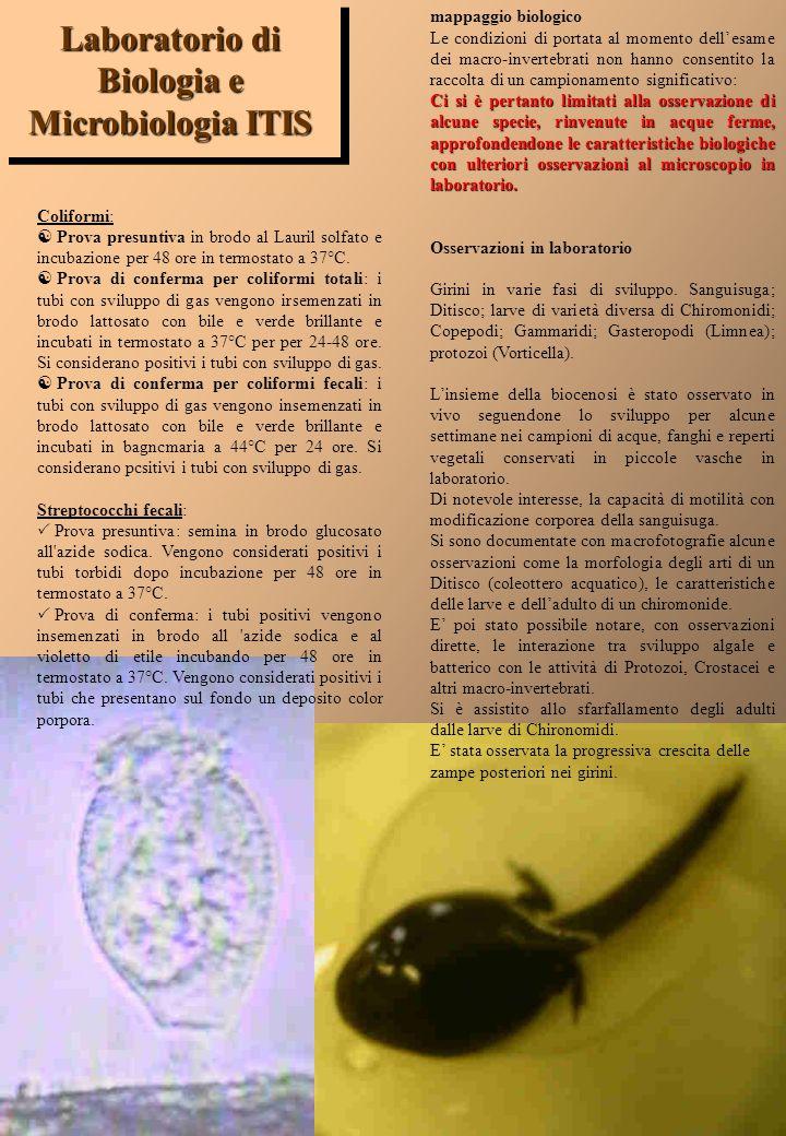 Laboratorio di Biologia e Microbiologia ITIS
