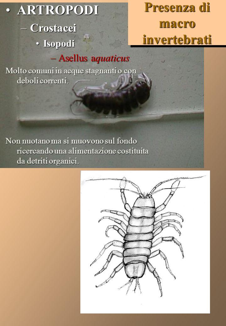 Presenza di macro invertebrati
