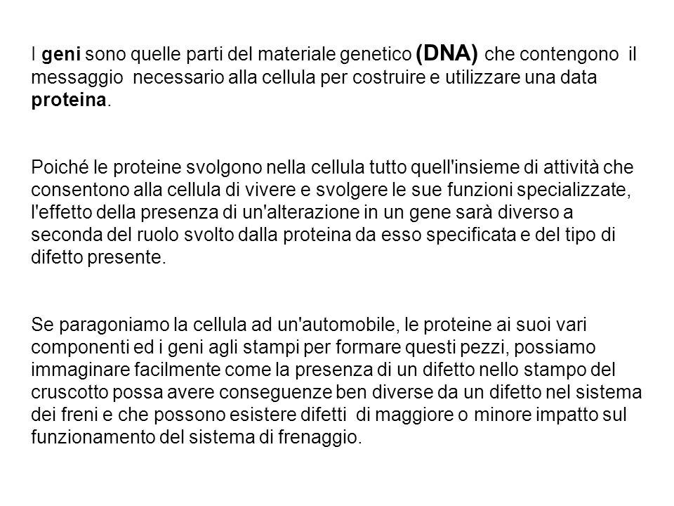 I geni sono quelle parti del materiale genetico (DNA) che contengono il messaggio necessario alla cellula per costruire e utilizzare una data proteina.