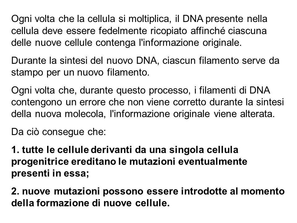 Ogni volta che la cellula si moltiplica, il DNA presente nella cellula deve essere fedelmente ricopiato affinché ciascuna delle nuove cellule contenga l informazione originale.