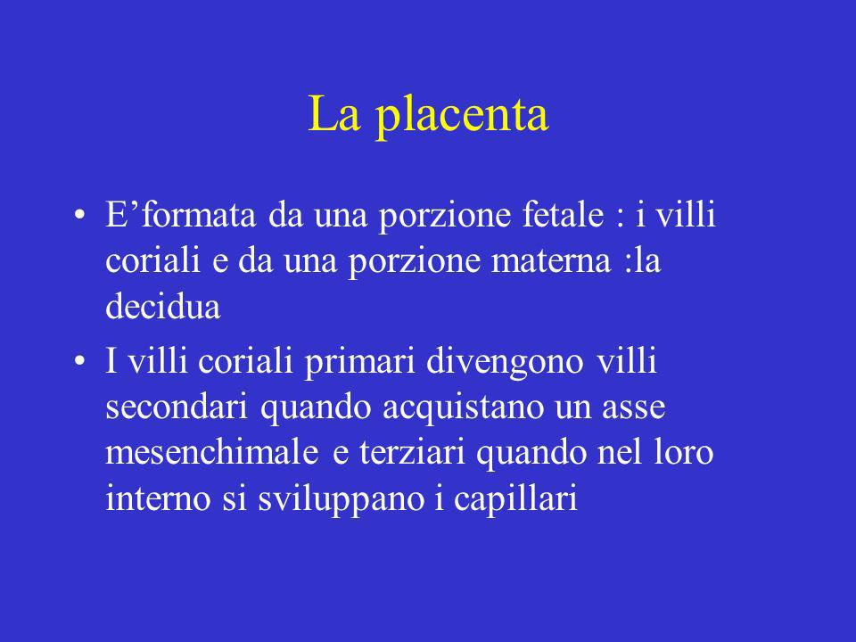 La placenta E'formata da una porzione fetale : i villi coriali e da una porzione materna :la decidua.