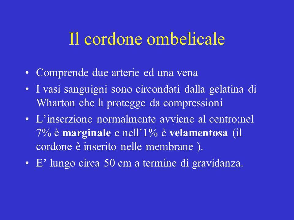 Il cordone ombelicale Comprende due arterie ed una vena