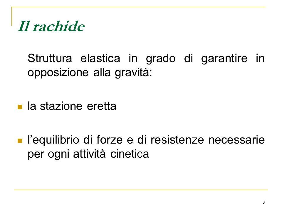 Il rachide Struttura elastica in grado di garantire in opposizione alla gravità: la stazione eretta.