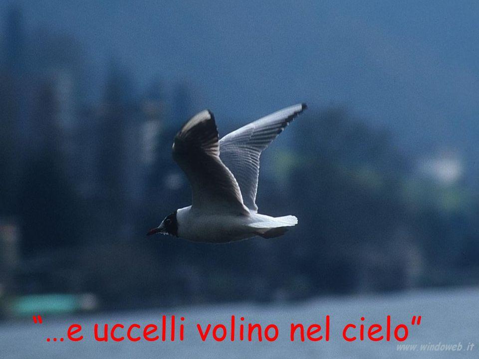 …e uccelli volino nel cielo