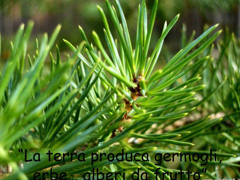 La terra produca germogli, erbe… alberi da frutto