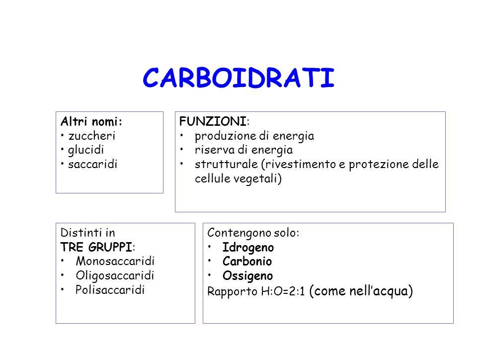 CARBOIDRATI Altri nomi: zuccheri glucidi saccaridi FUNZIONI: