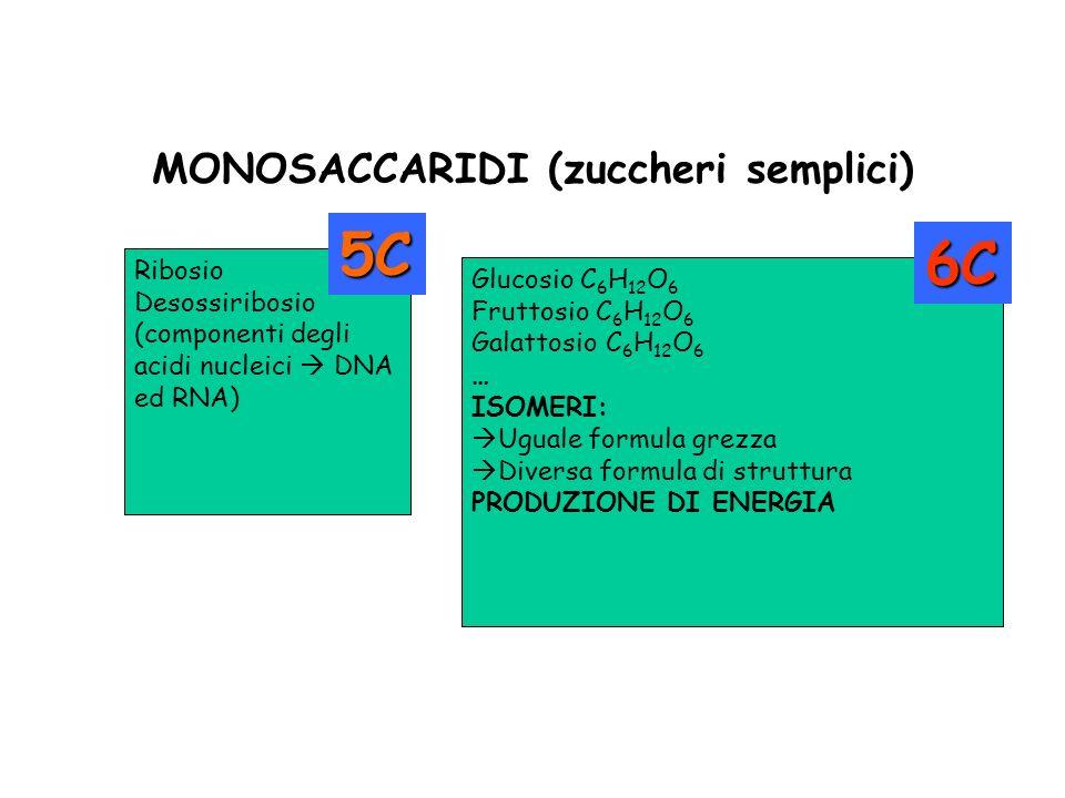 MONOSACCARIDI (zuccheri semplici)