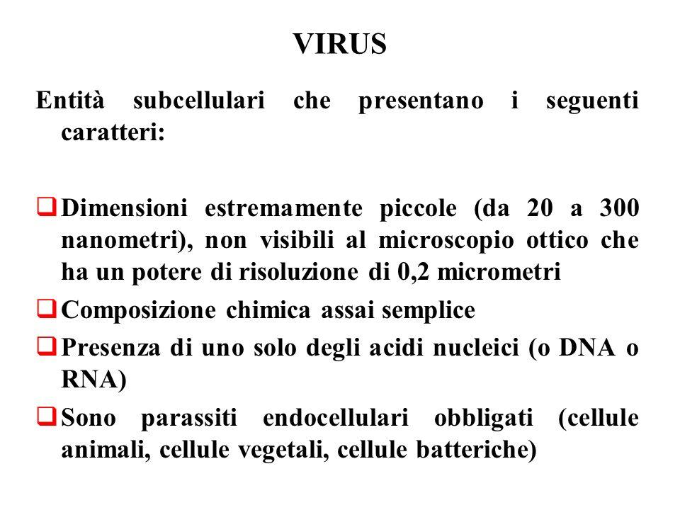 VIRUS Entità subcellulari che presentano i seguenti caratteri: