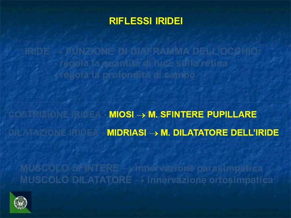 IRIDE  FUNZIONE DI DIAFRAMMA DELL'OCCHIO: