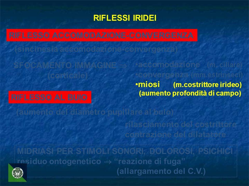 RIFLESSO ACCOMODAZIONE-CONVERGENZA