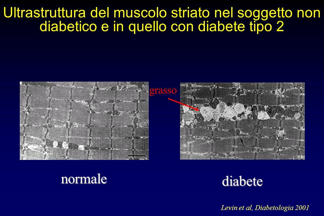 Ultrastruttura del muscolo striato nel soggetto non diabetico e in quello con diabete tipo 2