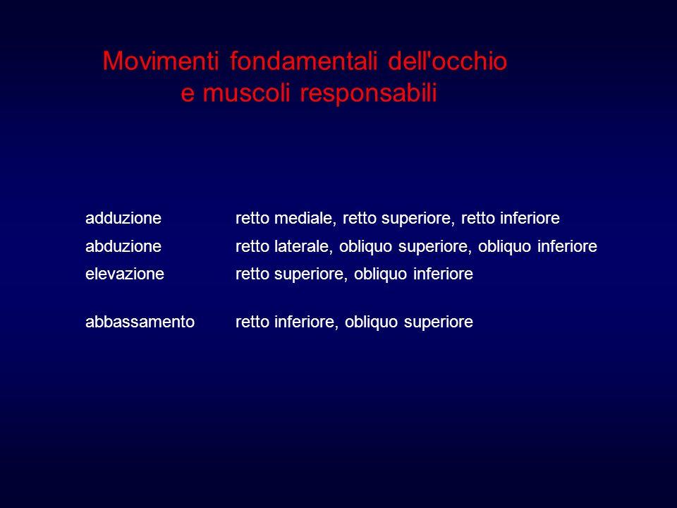 Movimenti fondamentali dell occhio e muscoli responsabili