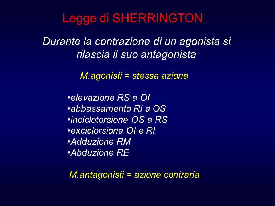 Legge di SHERRINGTON Durante la contrazione di un agonista si rilascia il suo antagonista. M.agonisti = stessa azione.