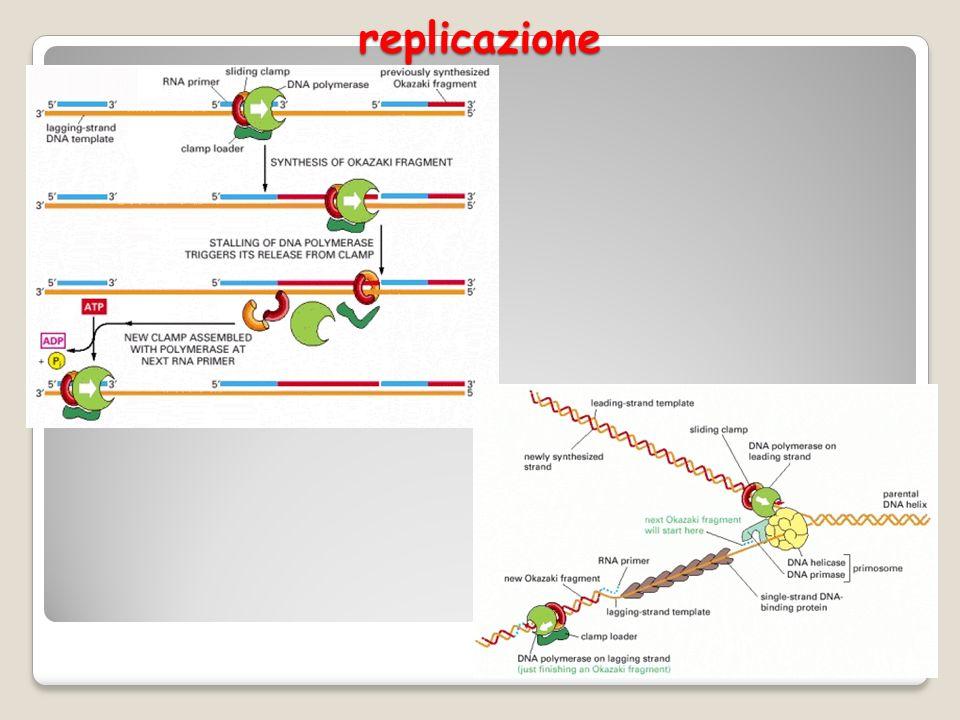 replicazione