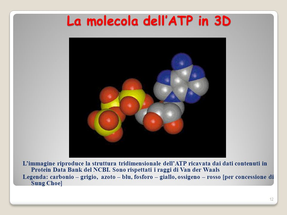 La molecola dell'ATP in 3D