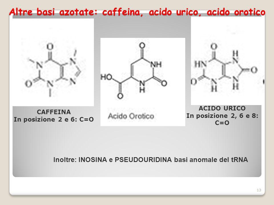 Altre basi azotate: caffeina, acido urico, acido orotico