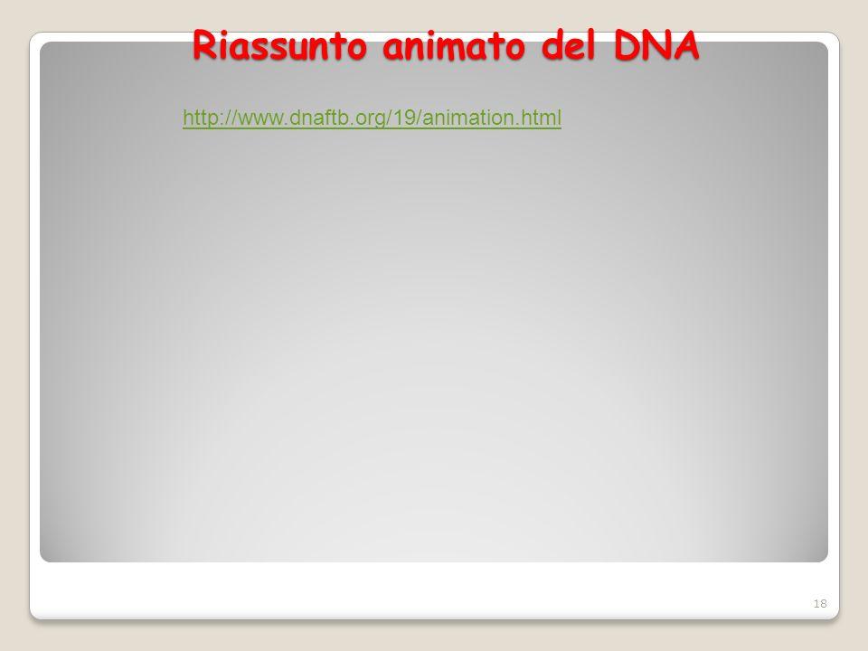 Riassunto animato del DNA