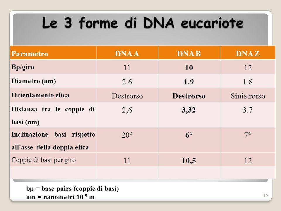 Le 3 forme di DNA eucariote