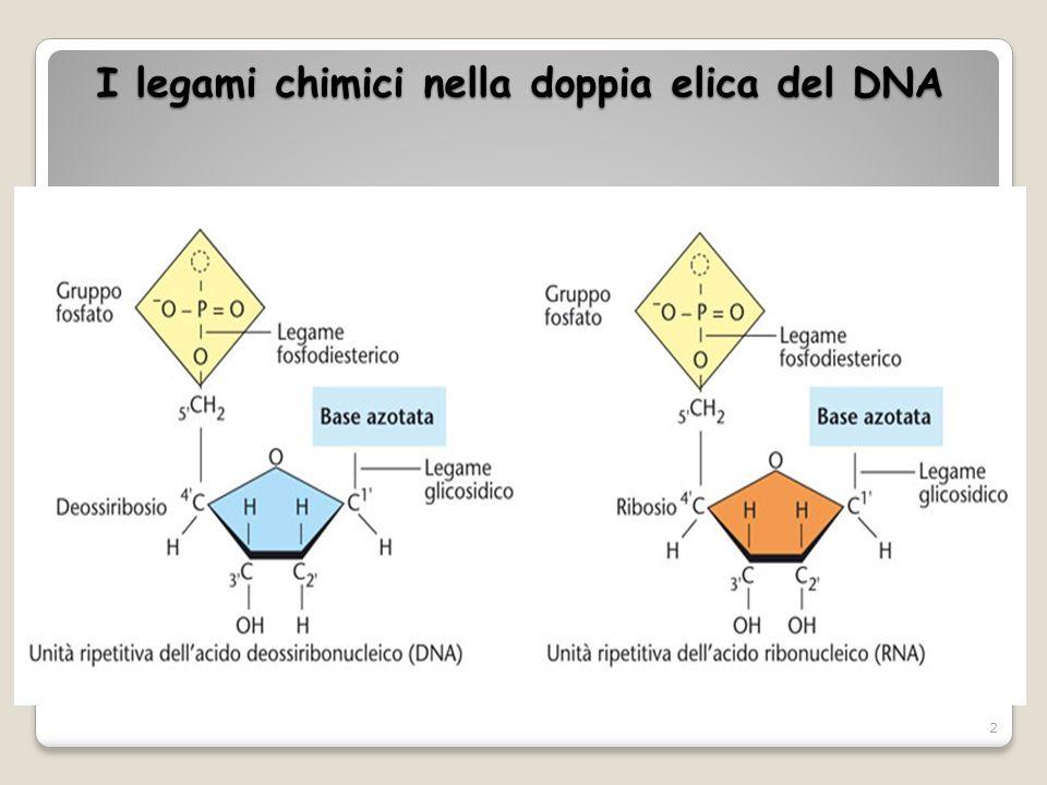 I legami chimici nella doppia elica del DNA