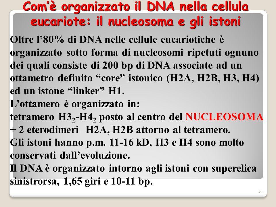 Com'è organizzato il DNA nella cellula eucariote: il nucleosoma e gli istoni