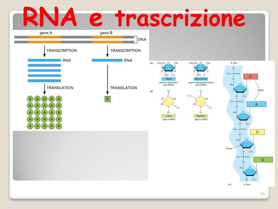 RNA e trascrizione
